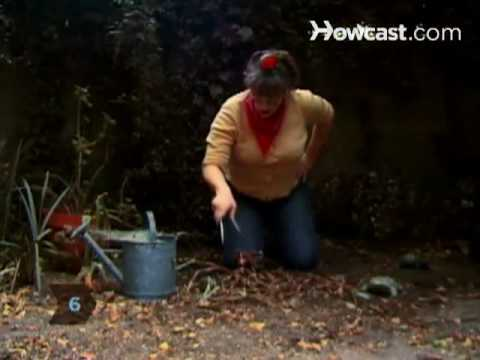 How to get rid of garden snails slugs youtube for How to get rid of slugs in garden