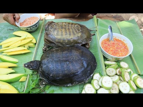 How to prepare turtle for cooking