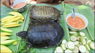 Yummy cooking turtle recipe - Cooking skill