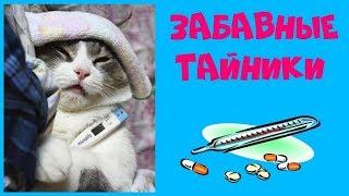 Коты у ветеринара: топ-20 забавных тайников, которые нашли котики в кабинете у врача