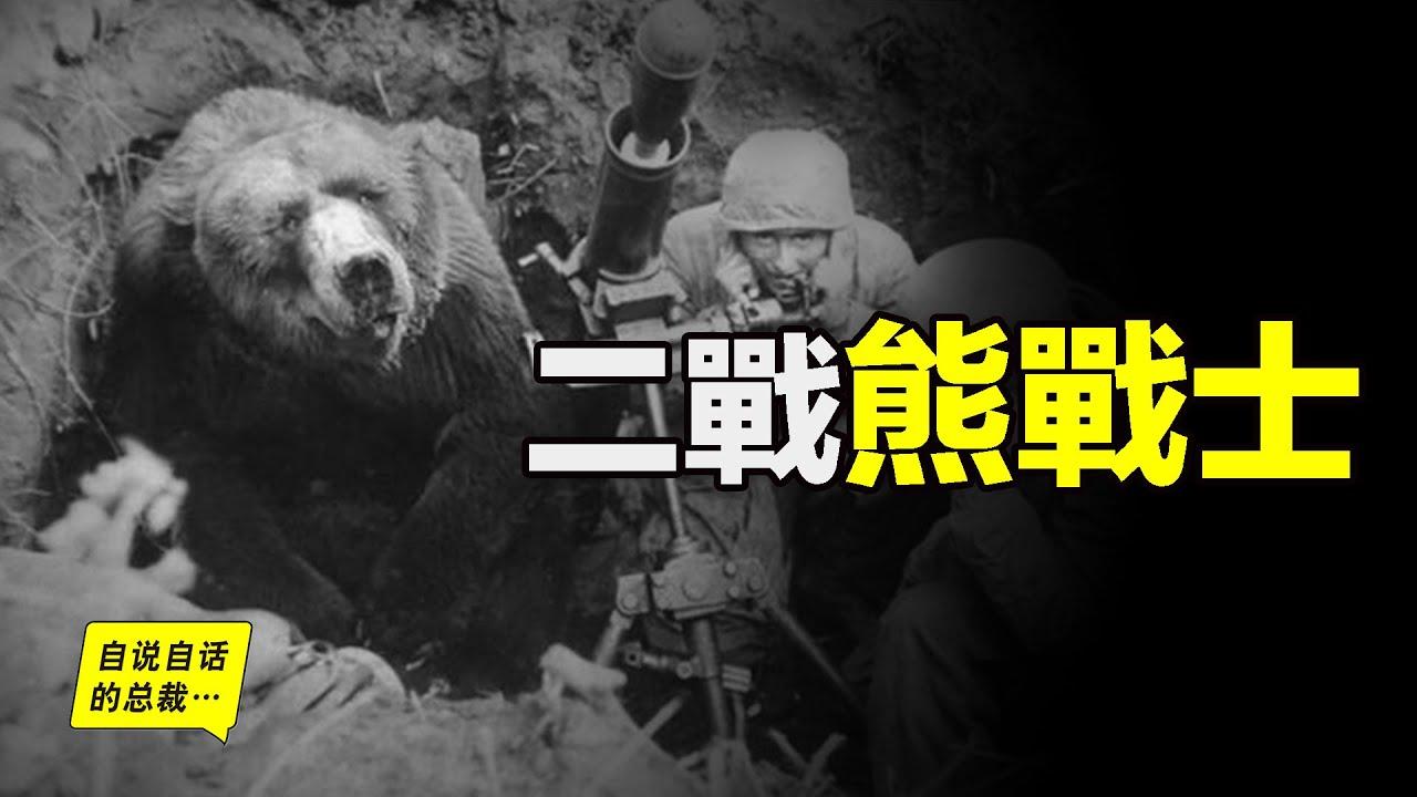 二戰中的熊戰士:抽煙、喝酒、把妹,還能晉升下士……|自說自話的總裁