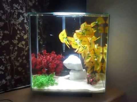 fluval edge 2 46 litre aquarium youtube. Black Bedroom Furniture Sets. Home Design Ideas