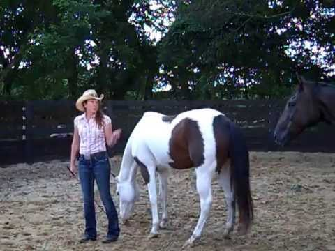 How to help the Scared, Distrustful Horse during Round Pen, Liberty