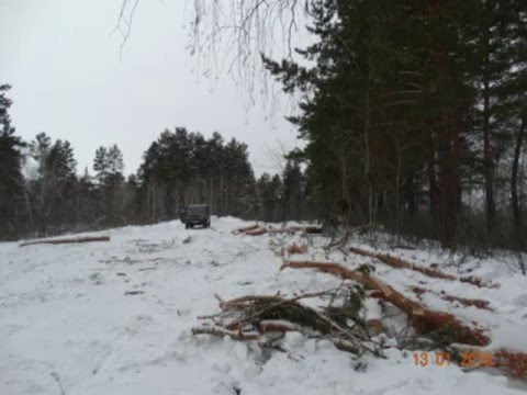 ОРЛАН БЕЛОХВОСТ Незаконные рубки в 199 квартале Лебяжинское лесничество