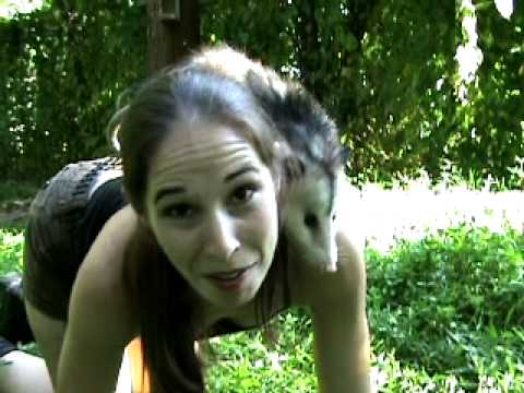 Adventures with Swamp Girl! Virginia Opossum!