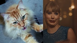 Taylor Swift - Delicate - Cat Cover
