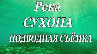 РЕКА СУХОНА ПОД ВОДОЙ. Подводная Съёмка на Рыбалке в Великом Устюге