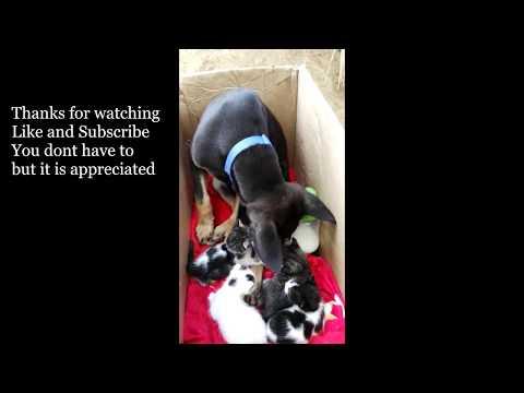 Puppy Meets Kittens #puppymeetskittens