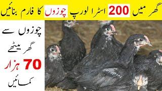Start Low Scale Australorp Chicken Poultry Farming Business Ideas In Pakistan|Hen Feasibility Report