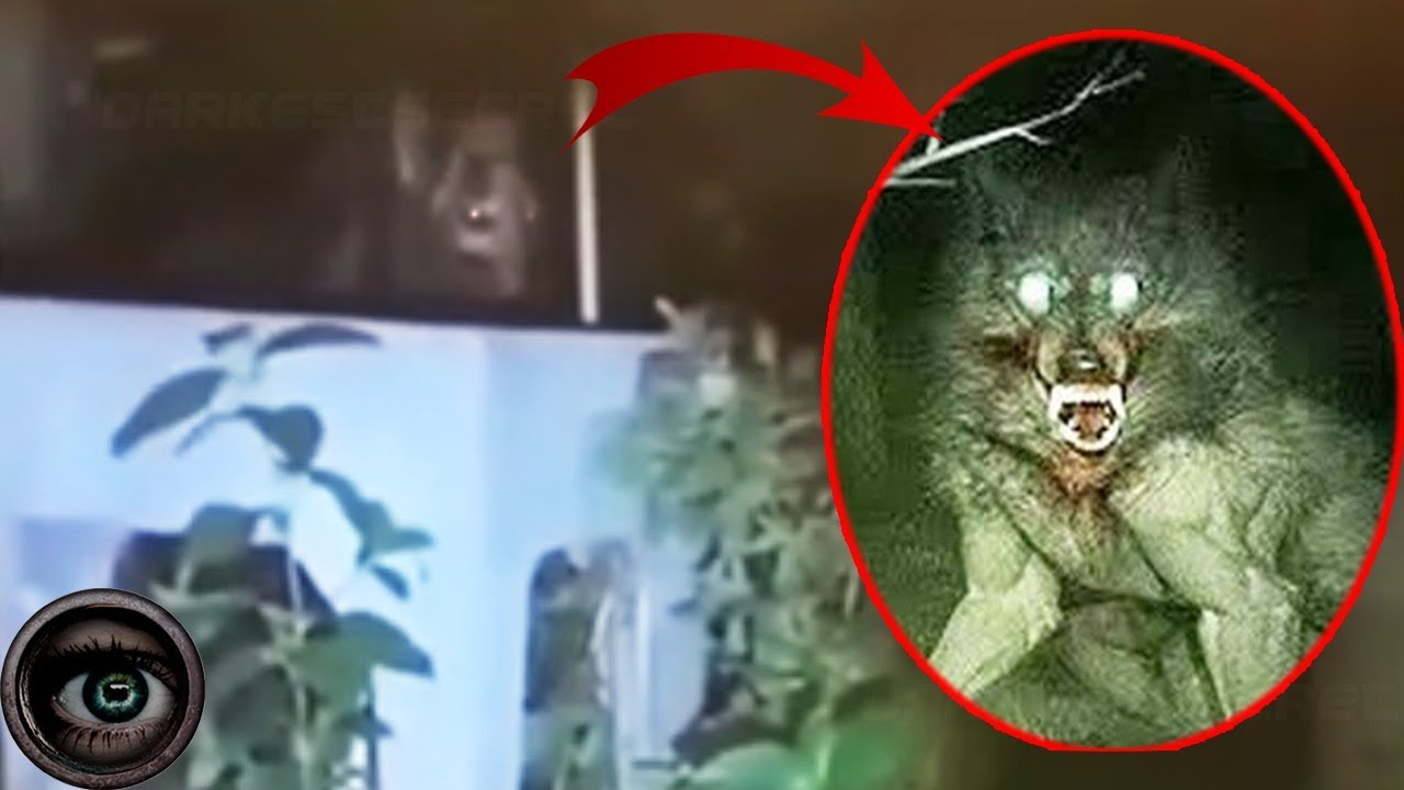 Download 5 Werewolves Caught On Camera