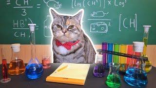 Recreating Cat Memes