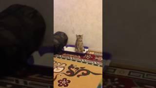 Котик смешно ходит в туалет