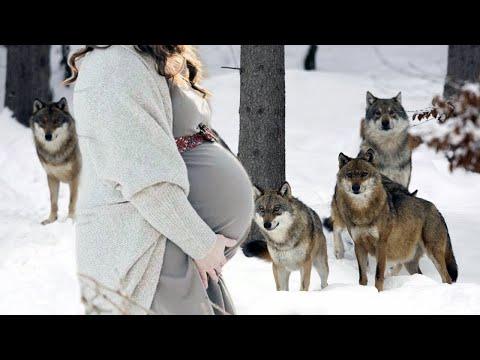 Девушка застряла ночью в лесу и ЗАМЕРЗАЛА от холода... Стая диких волков пришла к ней на ПОМОЩЬ...