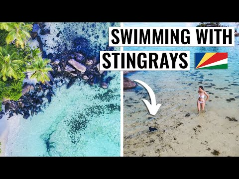 SWIMMING WITH STINGRAYS IN MAHE, SEYCHELLES | 4K TRAVEL VLOG