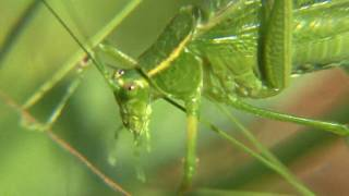 Katydid Nature Walks with Mark Fraser