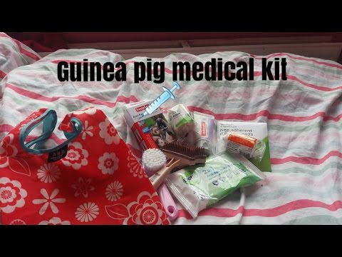 Whats in my guinea pig medical kit?
