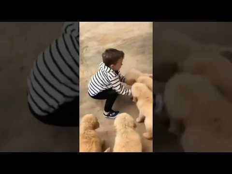 Baby plays with cute dogs whatsapp video