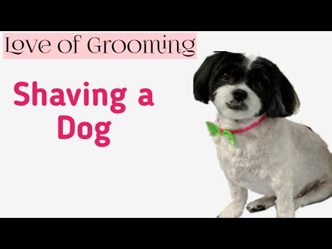 How to Shave a dog