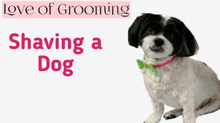 How to Shave a Dog | How to Clip a Dog
