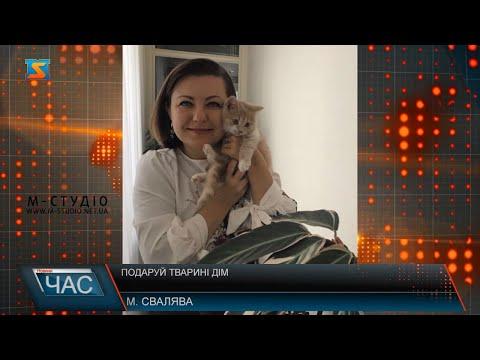Телекомпанія М-студіо: Подаруй тварині дім