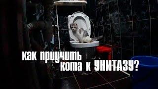 как приучить кота к унитазу? ;)