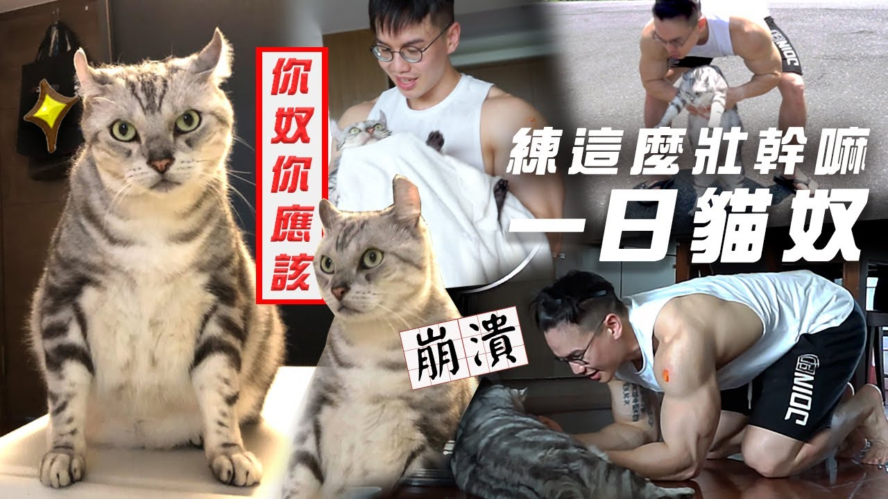 大H | IFBB PRO 練這麼壯幹嘛?我要挑戰「一日貓奴」! feat.斑斑