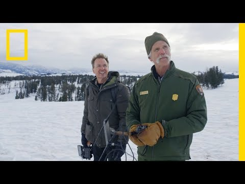 Tracking the Gray Wolf in Yellowstone | Explorer