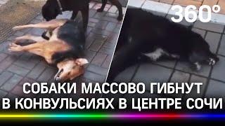 Сейчас умрёт я снял смерть жители Сочи сообщили об экзекуции собак на их глазах в центре города