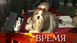 В Москве открылась двухдневная выставка собак «Евразия».