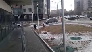 Собаки в Волгоград Сити (2019)