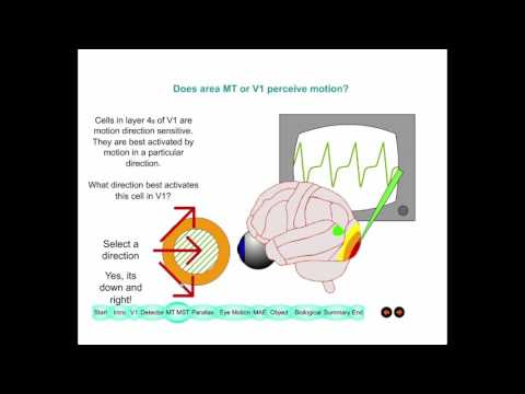Lecture 4 Visual Perception of Motion 2015