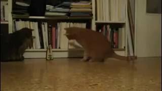 Кот напал на метроном!