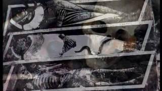 Serija TRAGANJA - 15. Traganje za životom posle smrti