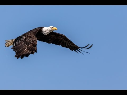 Seabeck WA Birds of Prey II 1080P