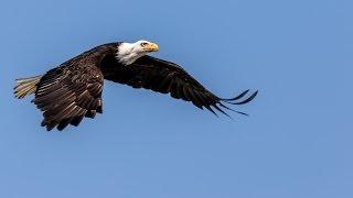 Seabeck WA Birds of Prey II 1080P