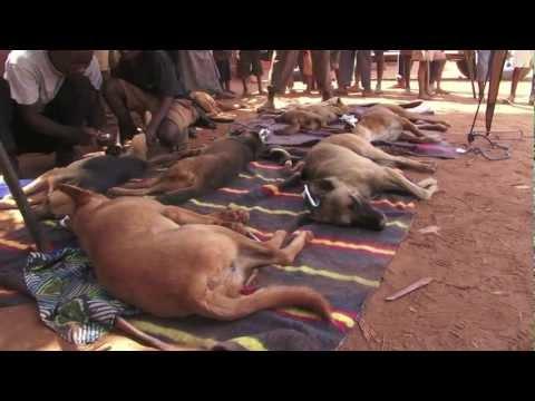 TV vet Joe Inglis in Malawi