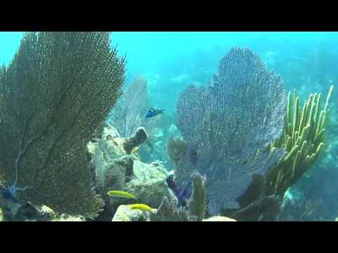 SHARK DIVE on Molasses Reef, Key Largo