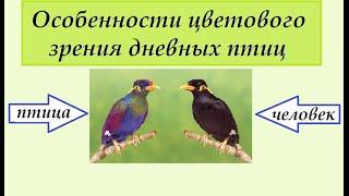 Цветовое зрение птиц. Интересные факты о дневных птицах