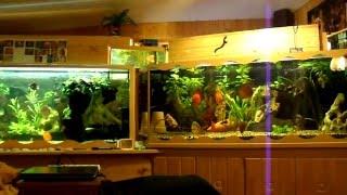 Aquariumanlage mit 3920 Liter MP4