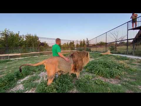Как я прошу львов МНЕ ПОМОЧЬ !