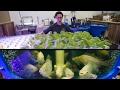 Ontario food bank harvesting fresh fish and greens indoors