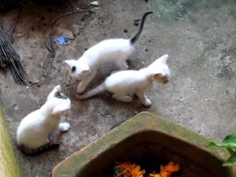 Mother Cat and her kittens from Calicut, Kerala, INDIA !