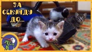 Котята знакомятся с пылесосом. Котята и Рыжик играют. Рыжик нашел неопознанный объект