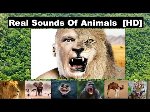 Sound Effects Of Animals | Real Sounds of Animals | 2016 | HD