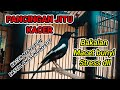 Pancingan Kacer Jitu Suara Dasar Kacer  Mp3 - Mp4 Download