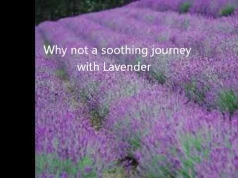 Lavender and Rose Scented Olive Gold 03