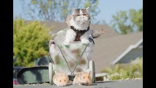 If Cats Ruled the World thumbnail