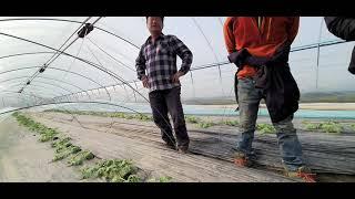 [게르마늄농업방송]부여 일반수박 재배농가 방문