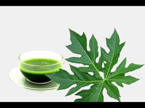 How to make Papaya leaf juice for curing dengue fever