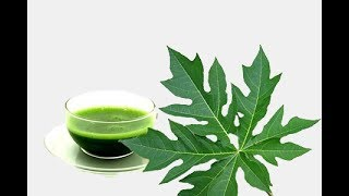 How to make Papaya leaf juice for curing dengue fever